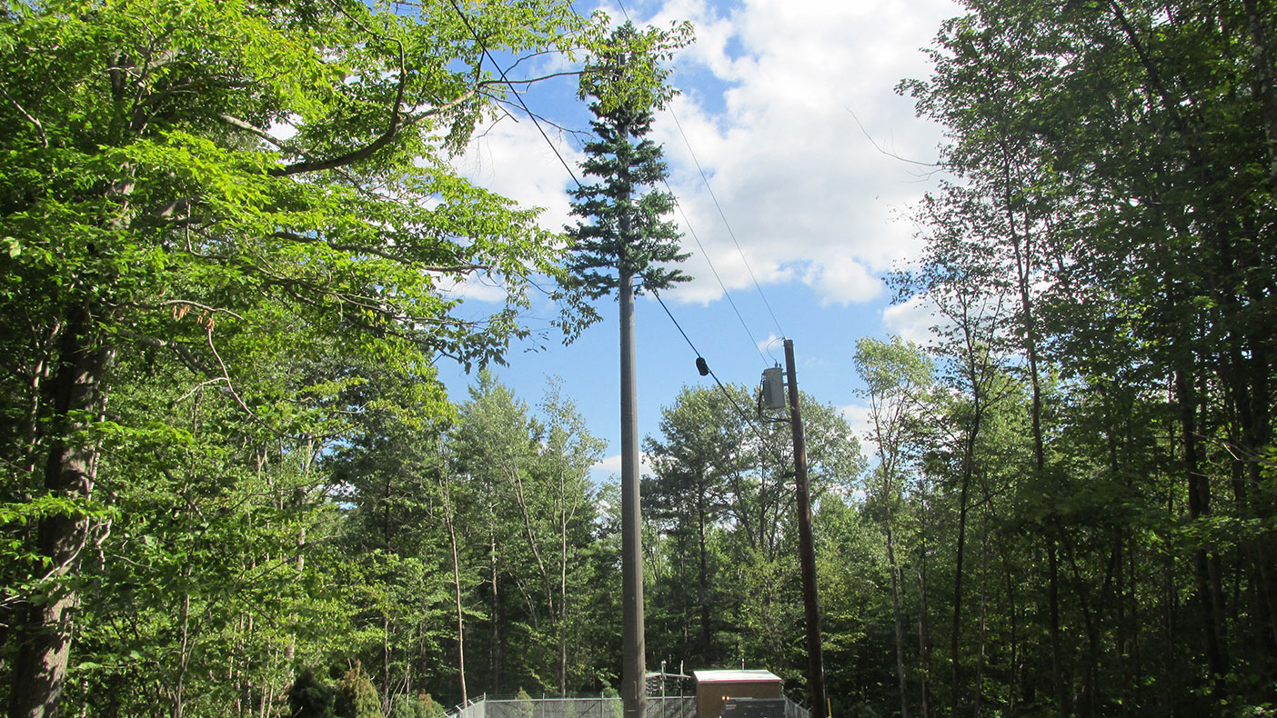 With wireless needs rising in rural counties, engineers have designed discreet ways of blending modern services with local woodland  areas.
